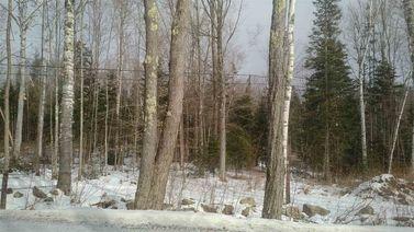 Lot 12 Birches Unit 12
