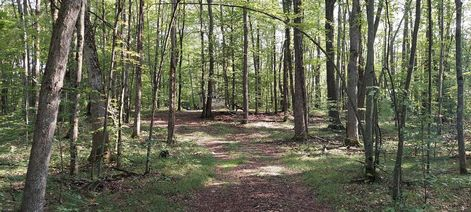 V/L E Oakwood Trail