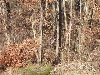 Lot 112 Timber Ridge