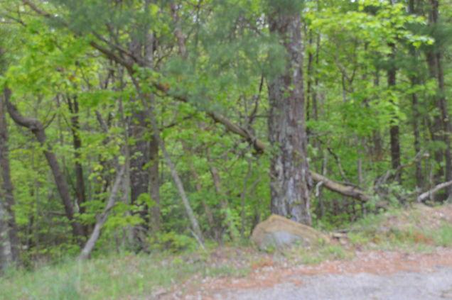 0 Cumberland Gap RD - Photo 1 of 1